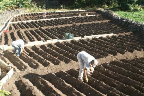 Agricultura. La Gomera