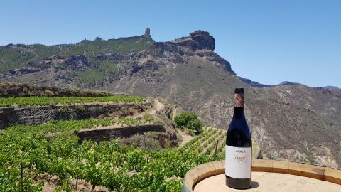 Vino crianza Bodegas Bentayga. Gran Canaria