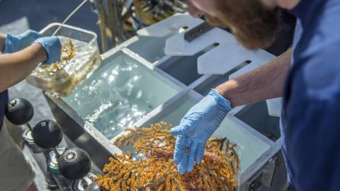 Científicos descubren 30 nuevas especies en aguas profundas de las Galápagos
