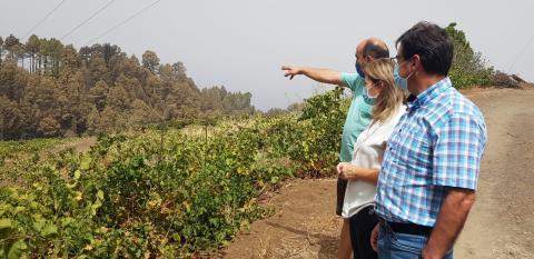 Zona agrícola afectada por el incendio forestal de Garafía. La Palma