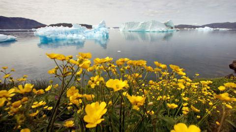 Narsaq, Groenlandia. Dinamarca