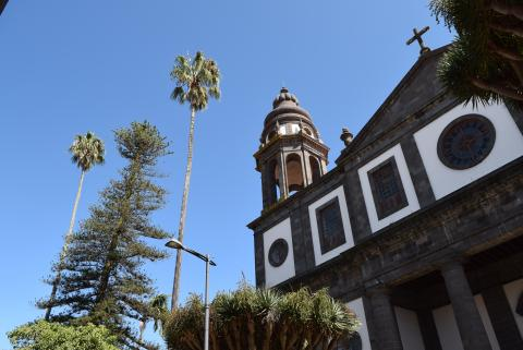 Conservación de las palmeras centenarias de la Catedral en La Laguna. Tenerife