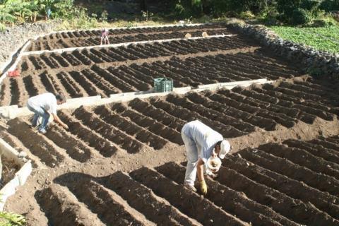 La Gomera. Agricultura