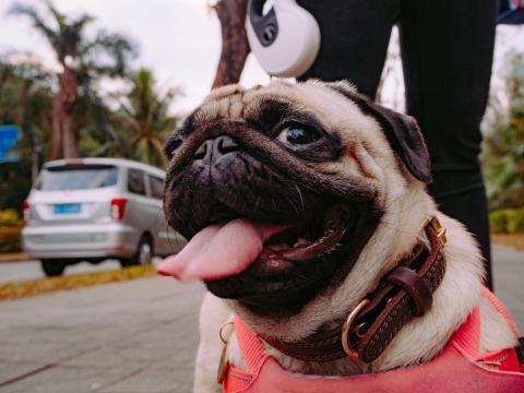 ¿Cómo transportar un perro si vas de viaje?