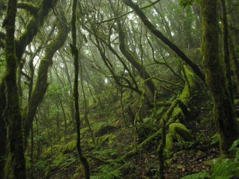Reservas de la Biosfera de Canarias / CanariasNoticias.es