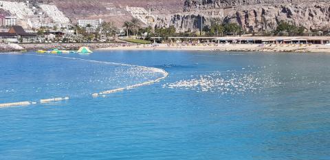 Playa de Amadores/ canariasnoticias.es