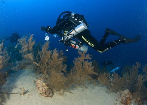 Investigadores de ABAS y LECOB delimitando las zonas de muestreo en el bosque de coral negro
