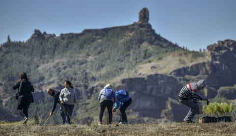 Reforestación. Cumbre de Gran Canaria/ canariasnoticias.es