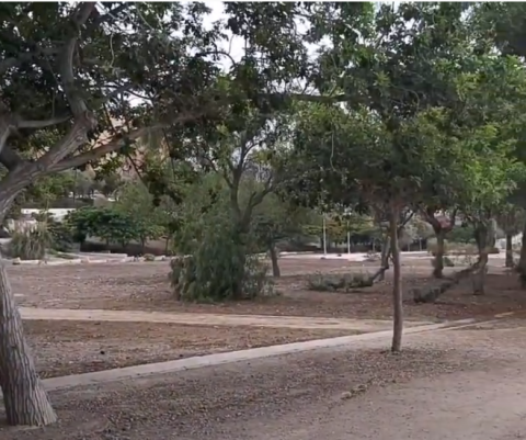Parques. Las palmas de Gran Canaria/ canariasnoticias.es