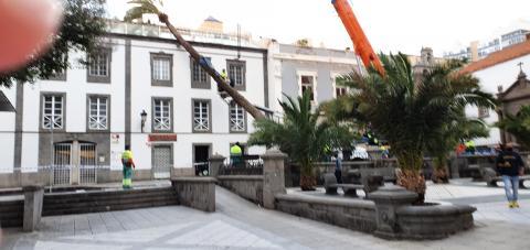 Palmera caída sobre una casa en la Alameda de Colón/ canariasnoticias