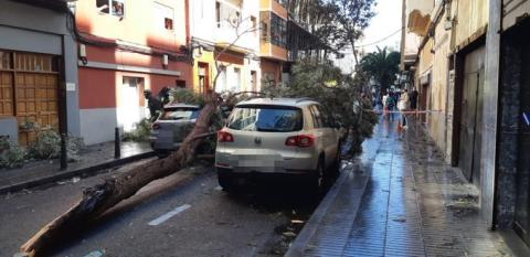 Calle La Naval. Caída de árbol/ canariasnoticias
