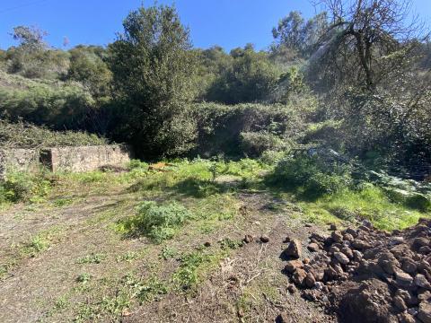 Valleseco adquiere el terreno de El Molino para aparcamientos / CanariasNoticias.es