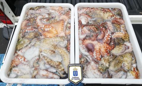 Pulpo incautado por Inspección Pesquera / CanariasNoticias.es