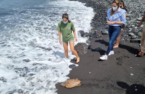 Suelta de tortuga en la Playa de Los Guirres en Tazacorte (La Palma) / CanariasNoticias.es