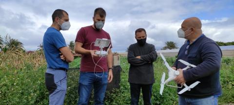 Control de plagas. Consejería de Agricultura/ canariasnoticias