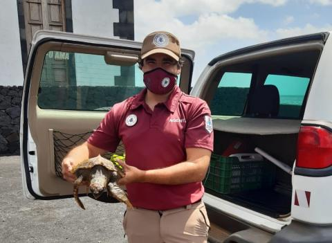 Tortuga rescatada. Fuencaliente. La Palma/ canariasnoticias