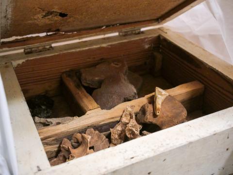 Patrimonio Cultural entrega 17 cajas de material arqueológico guanche al MUNA / CanaraisNoticias.es