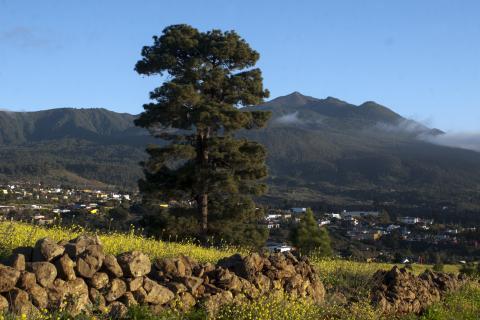 Reserva de la Biosfera de Canarias