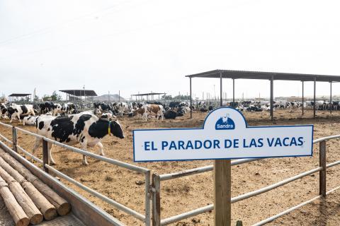 Leche Sandra abre su granja en Agüimes / CanariasNoticias.es